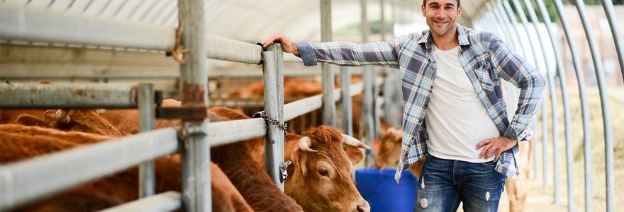 élevage de bovins