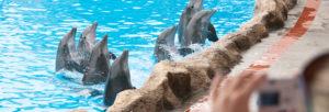 mammifères marins sur la Côte d'Azur